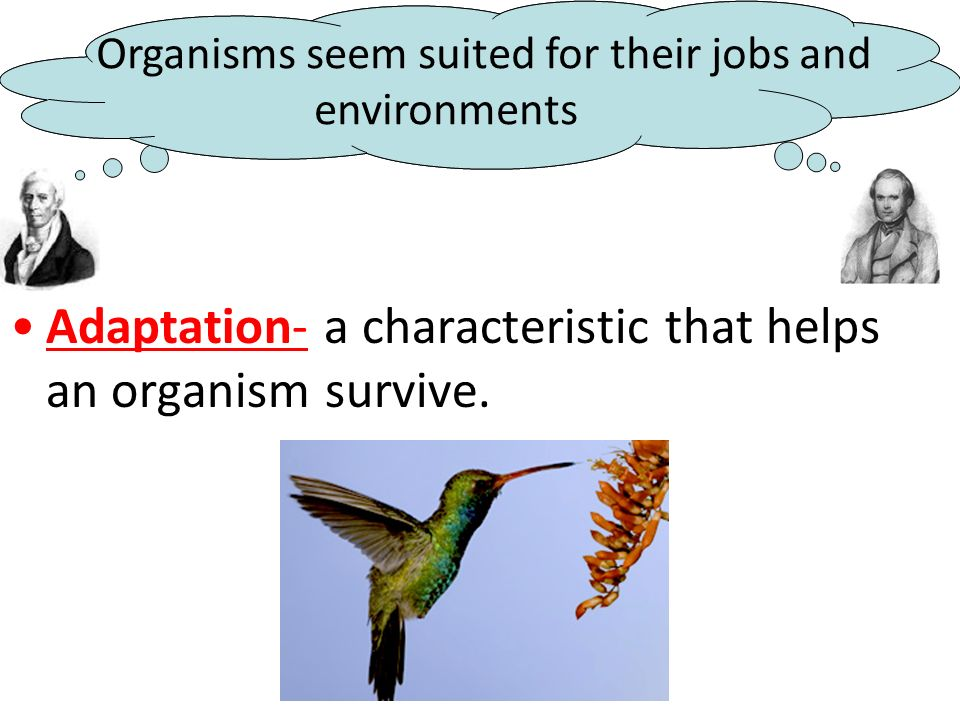 Adaptation- a characteristic that helps an organism survive.