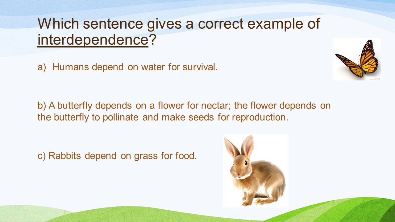 Were Dependent On Interdependence Ppt Download