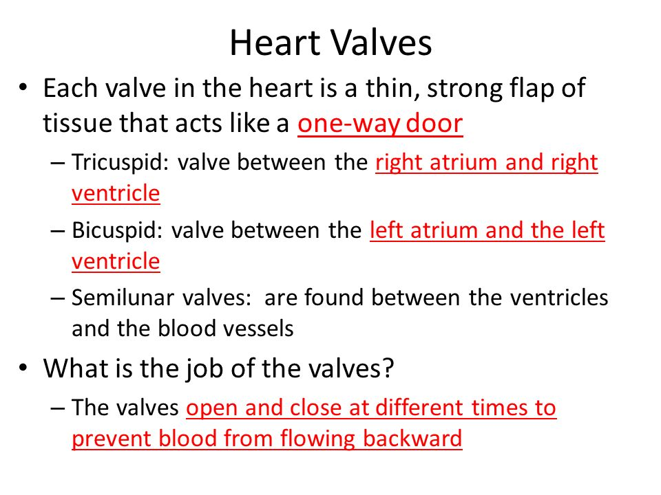 Heart Valves Each valve in the heart is a thin, strong flap of tissue that acts like a one-way door.
