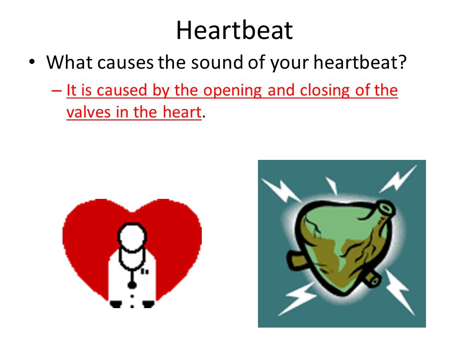 Heartbeat What causes the sound of your heartbeat