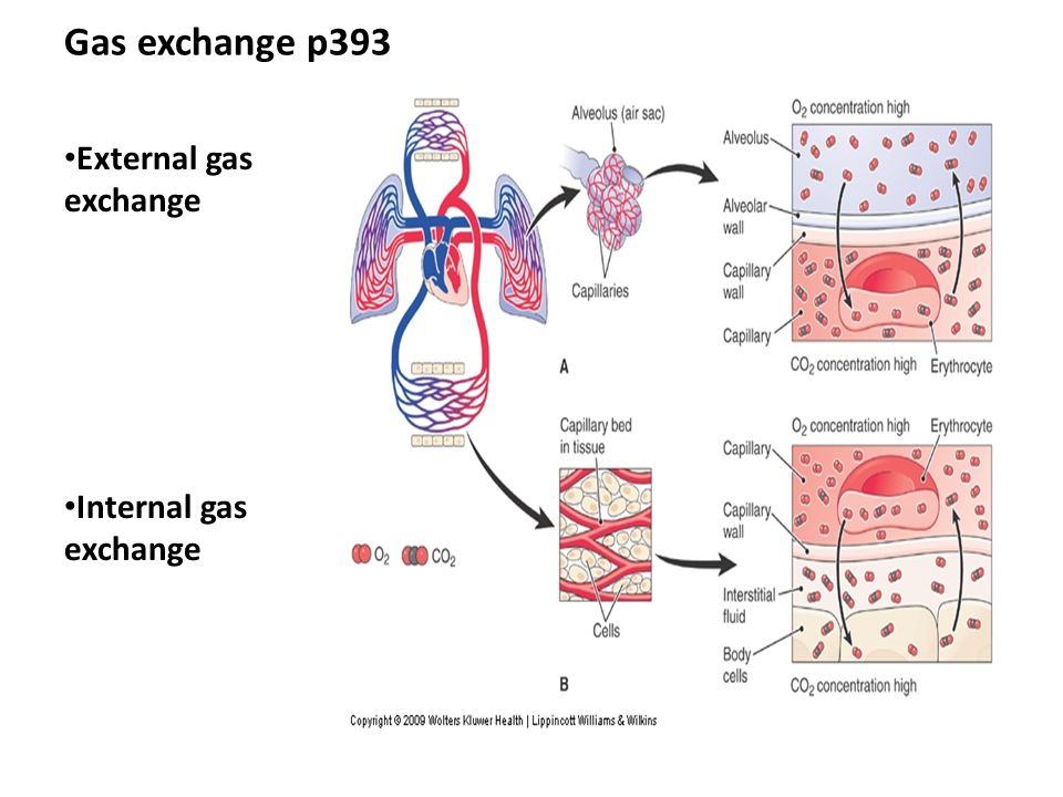 Pulmonary gas exchange driven by passive