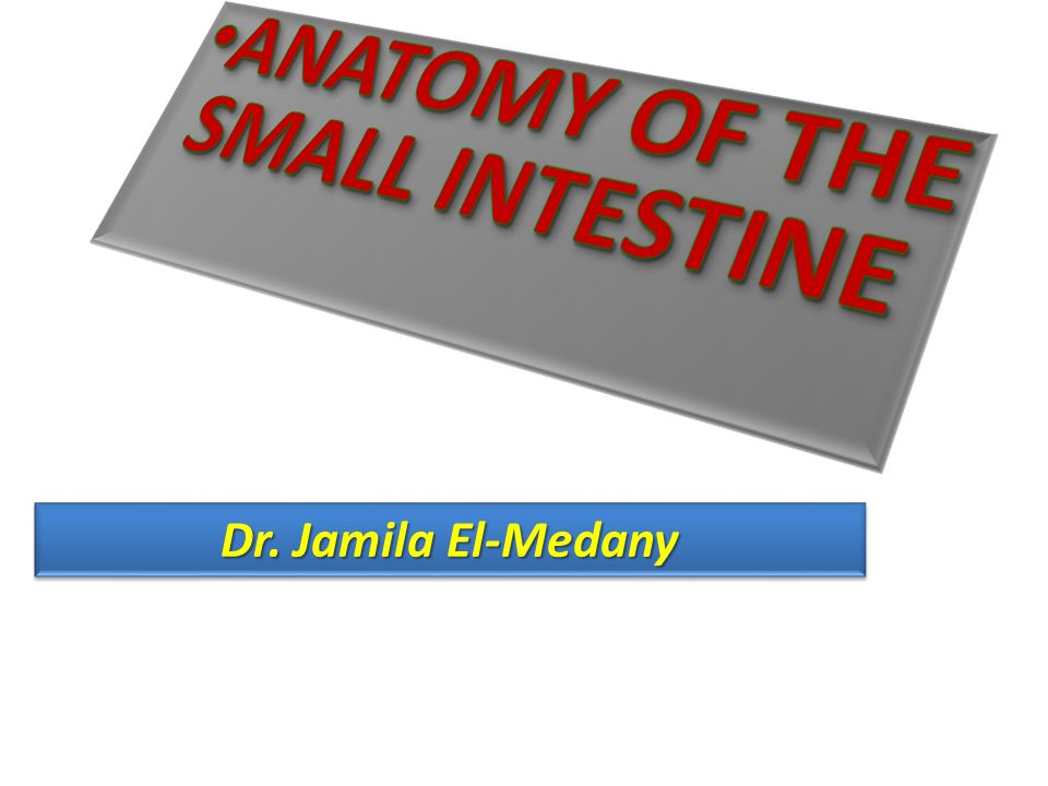 ANATOMY OF THE SMALL INTESTINE - ppt video online download
