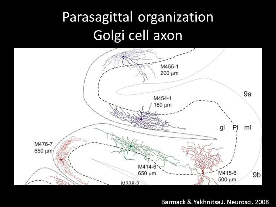 Parasagittal organization Golgi cell axon