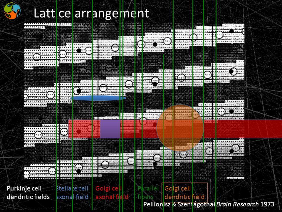Lattice arrangement Purkinje cell dendritic fields Stellate cell