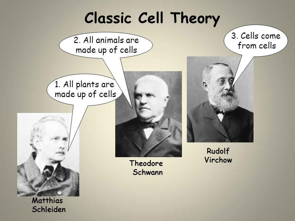 Cell Biology Overview The Cell Theory Microscopes Cell Membranes ...