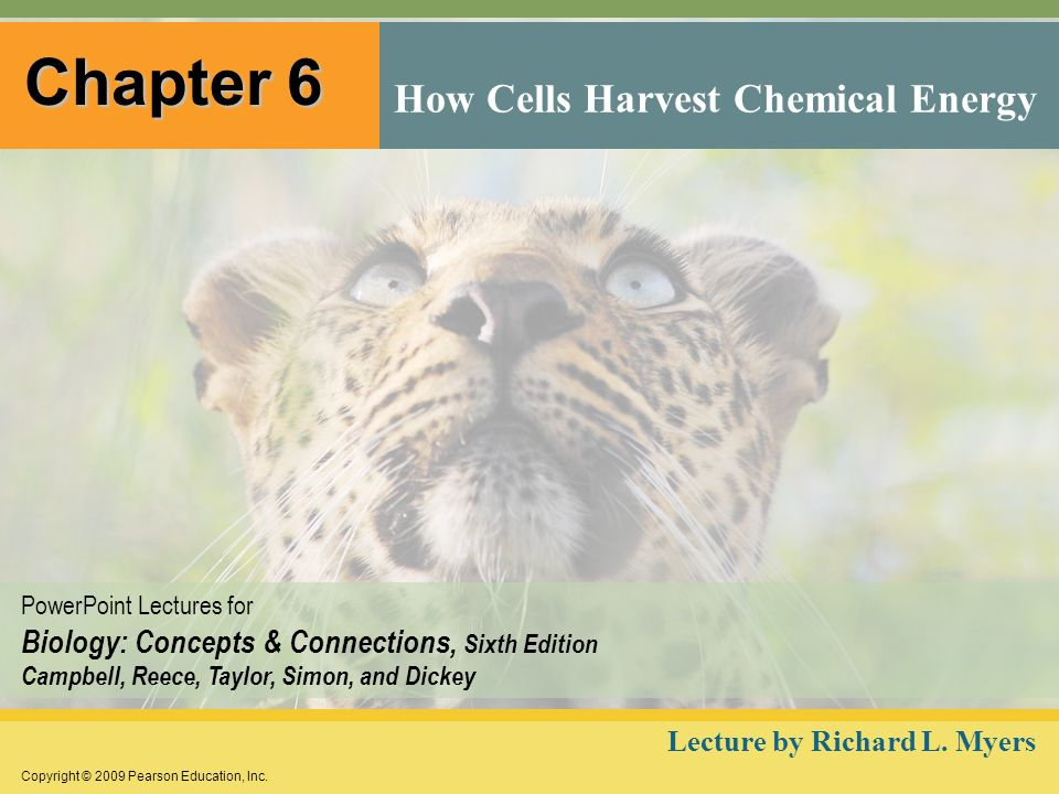 how cells harvest chemical energy For example the energy stored in the chemical bonds of food molecules can be   cells can harvest those electrons to get at the energy and use it to do work.