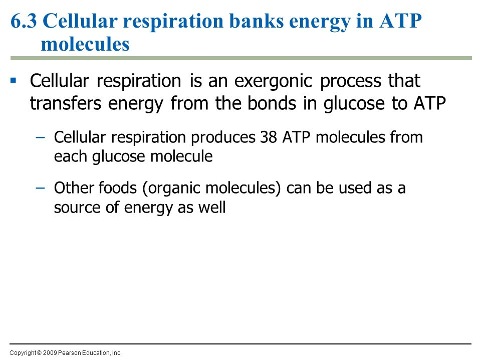 Think Of Each One As 100 Watt Light >> How Cells Harvest Chemical Energy - ppt download