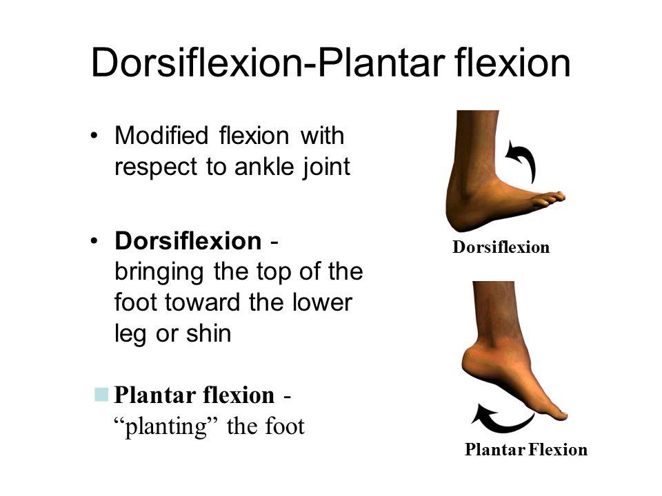 Niedlich Plantarflexion Definition Anatomie Fotos - Anatomie Ideen ...