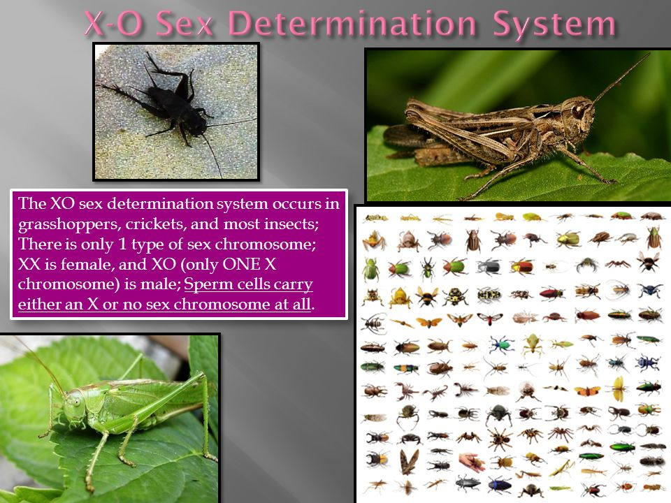 How Is Sex Determined In Most Ants And Bees 21