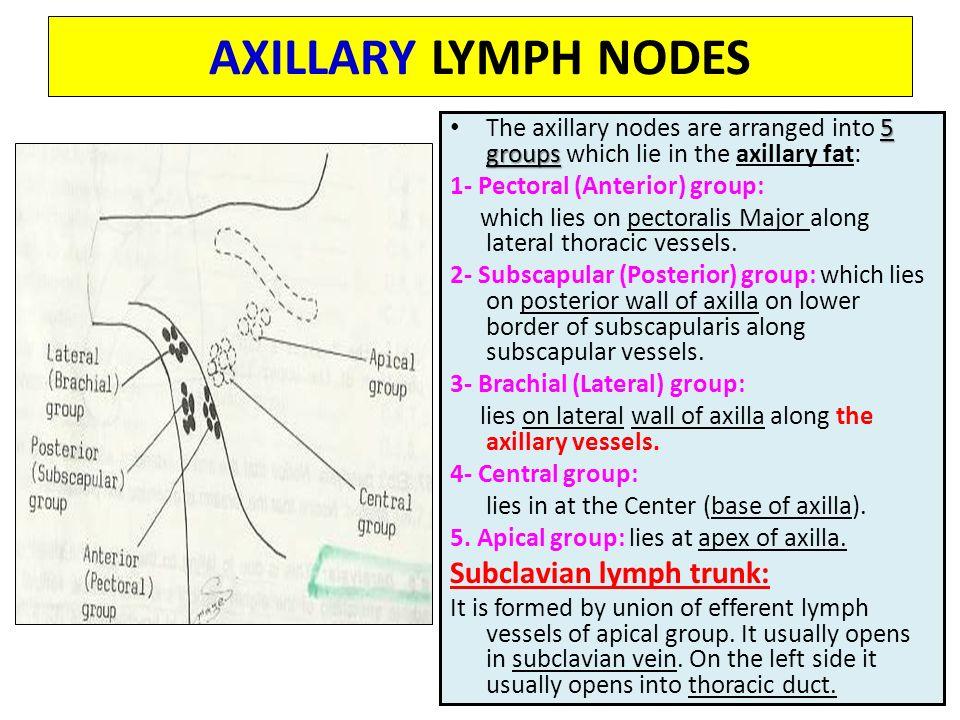 Axillary Node
