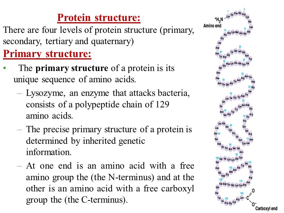 primary structure of protein pdf