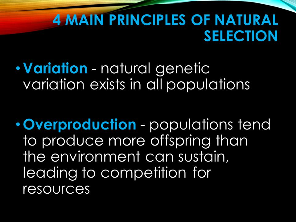 4 Main Principles of Natural Selection