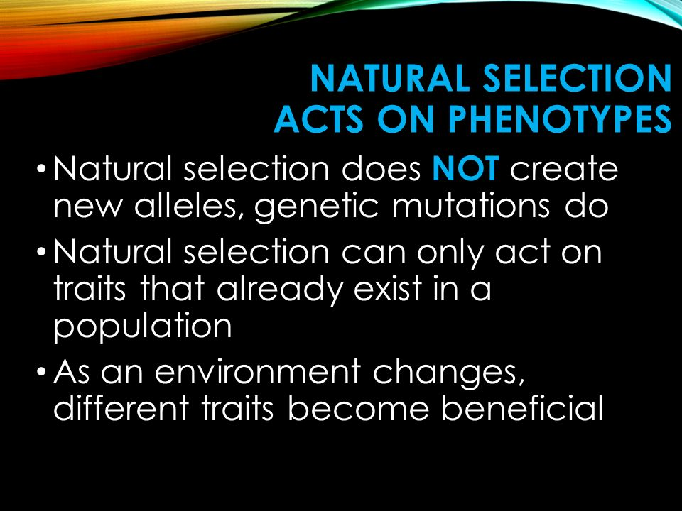 Natural Selection acts on Phenotypes