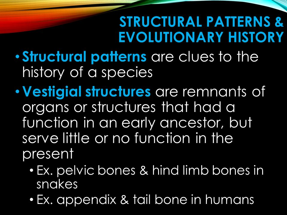 Structural Patterns & Evolutionary History