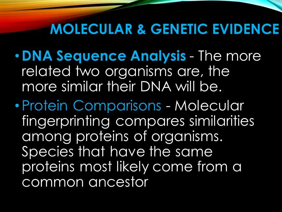 Molecular & Genetic Evidence