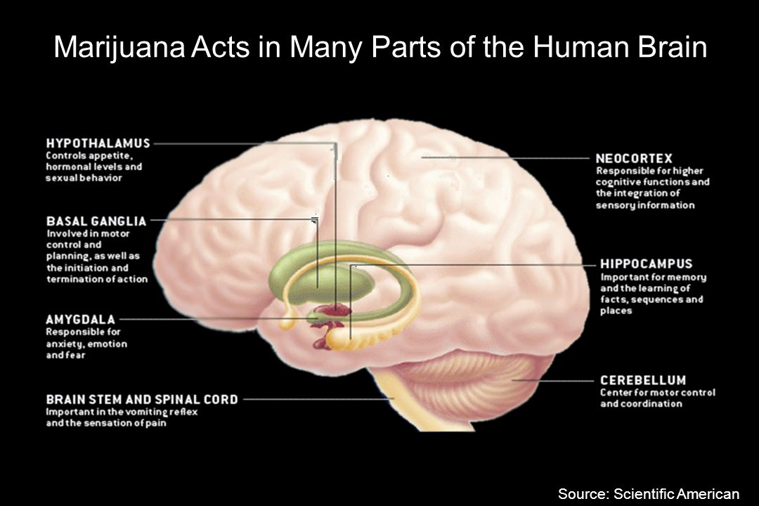 the effects of marijuana on the human body Contrary to urban myth, smoking marijuana to treat disease and its symptoms   for decades, to be much less harmful to the body than alcohol when used on a   and researchers say about the dangers and benefits of daily marijuana use   the discovery of the cannabinoid receptors in the 1990s led to the.