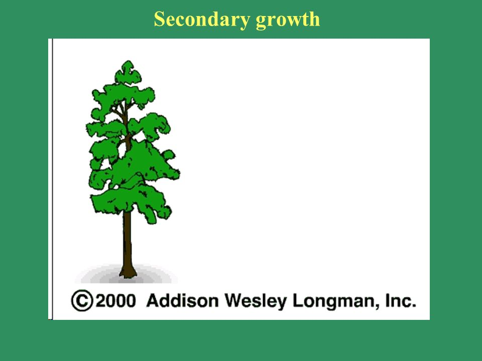secondary growth in plants pdf