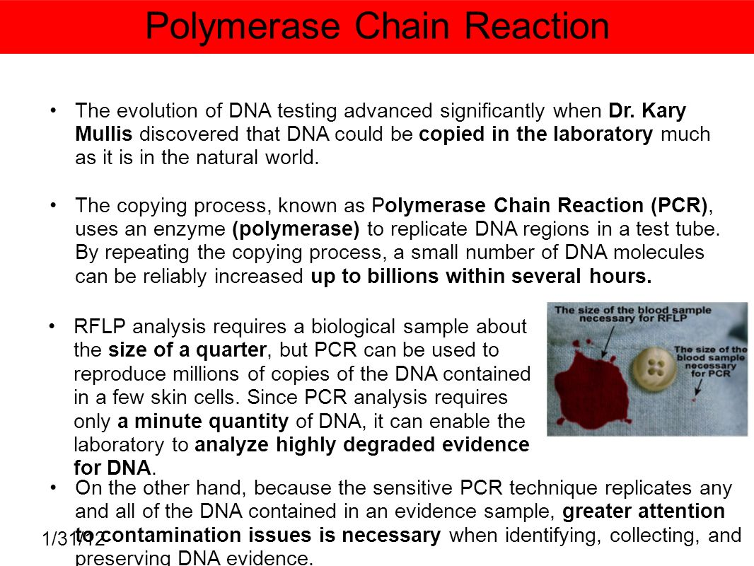 an analysis of the issues of dna fingerprinting and polymerase chain reaction Previous article in issue: arbitrarily amplified dna in  polymerase chain reaction fingerprinting in fungi using  sequence analysis of the cloned.
