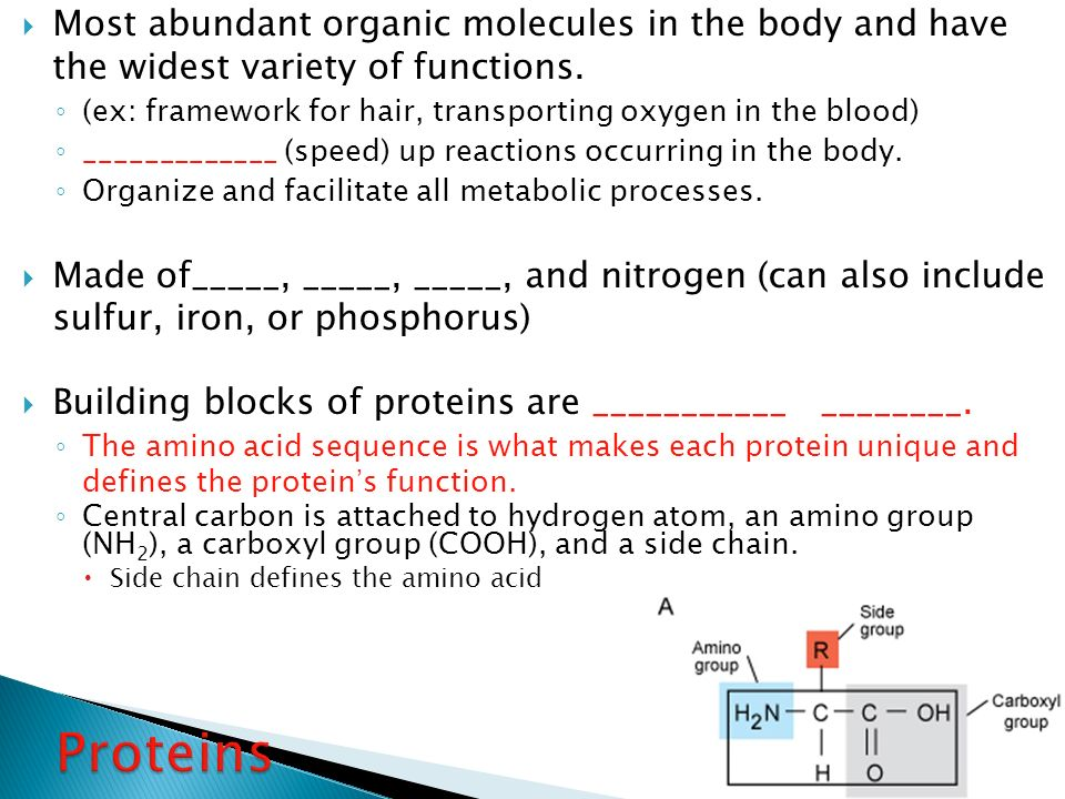 (ex: framework for hair, transporting oxygen in the blood)