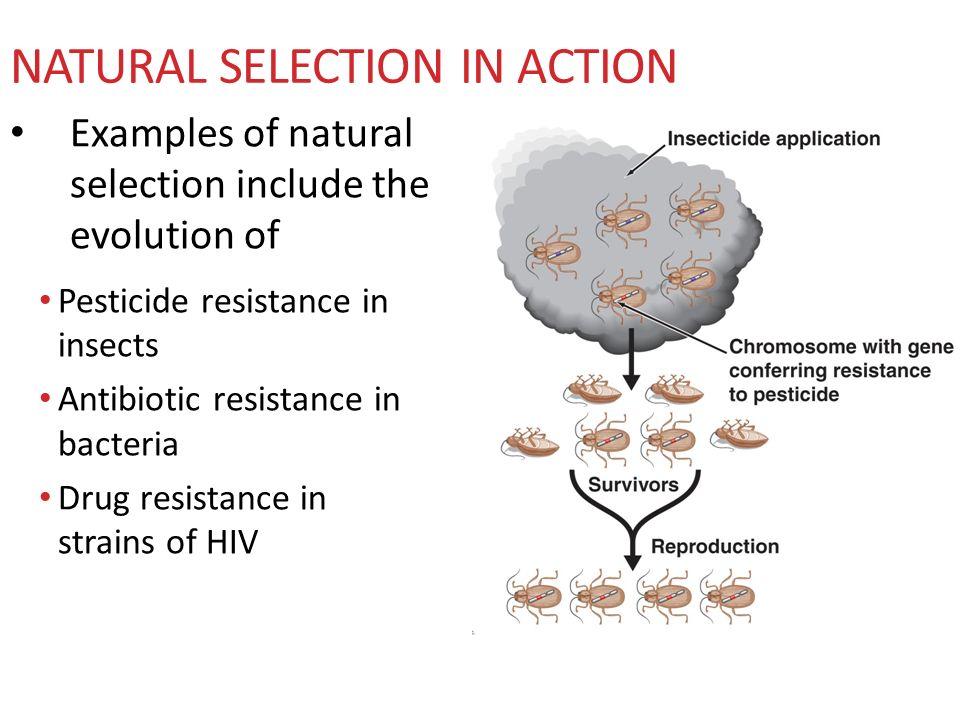 Natural Selection Antibiotic Resistance Evolution