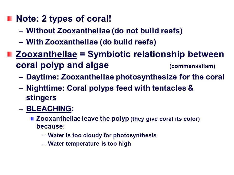 relationship between zooxanthellae and coral polyps reproducing