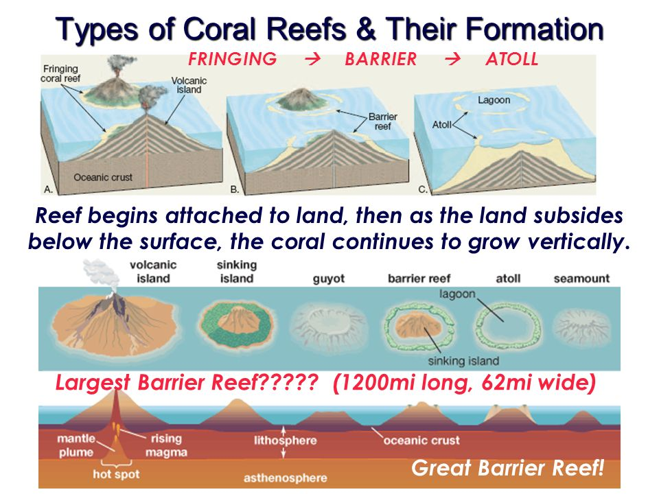 the three types of reefs Reservoir rock & source rock types: • the three sedimentary rock types most frequently encountered in oil fields are shales build coral reefs and banks.