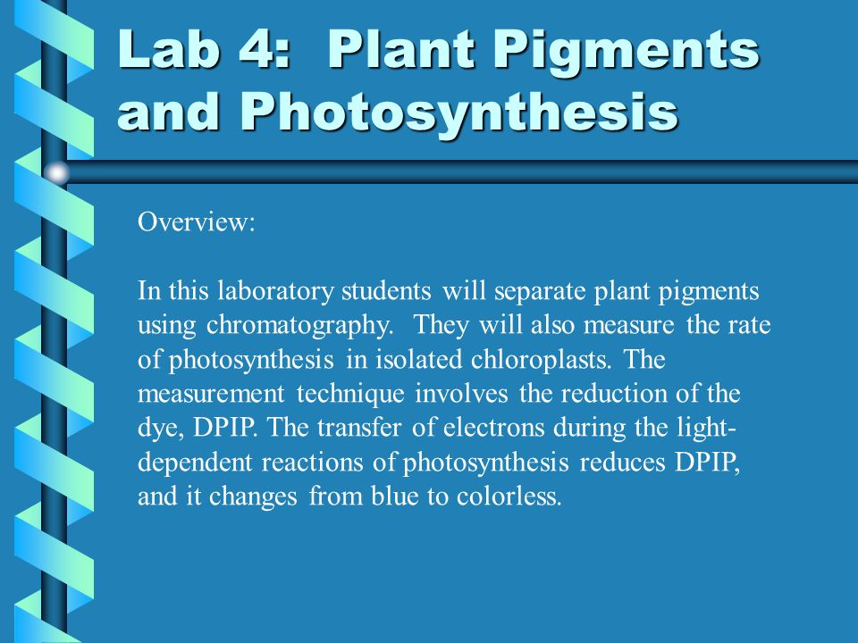 ap biology lab four plant pigments and photosynthesis Ap biology lab 4 - plant pigments & photosynthesis paul andersen explains  how pigments can be separated using chromatography he shows how you can.