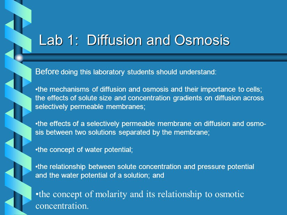 the relationship between cell size and diffusion lab questions