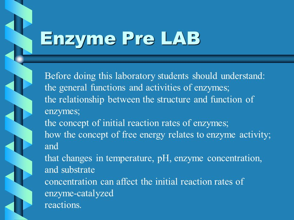 relationship between structure and function of an enzyme