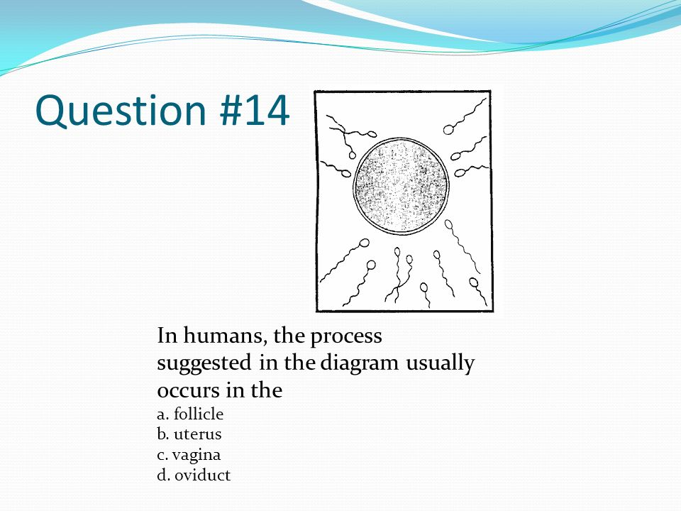 Last person standing ppt video online download question 14 in humans the process suggested in the diagram usually occurs in the ccuart Image collections