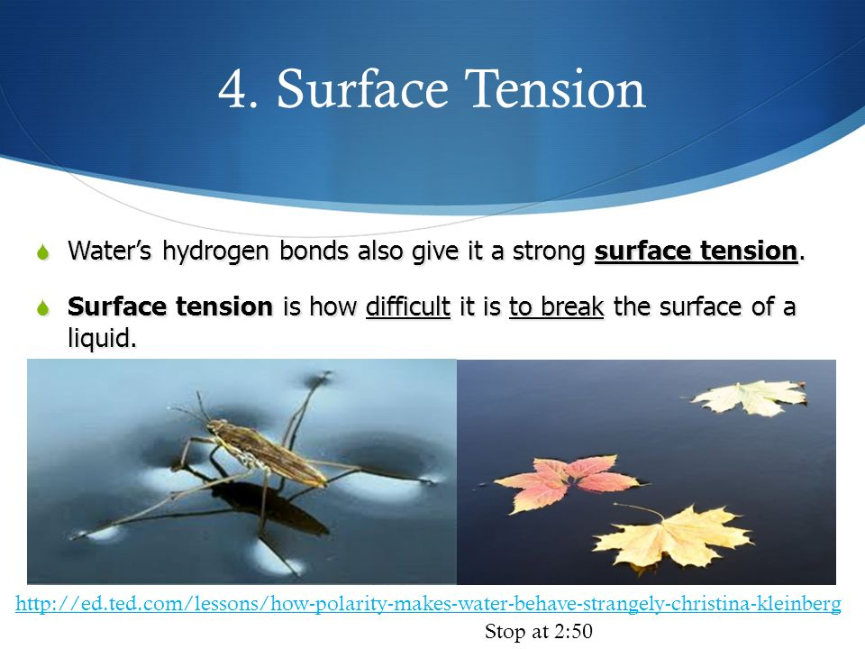 4. Surface Tension Water's hydrogen bonds also give it a strong surface tension.
