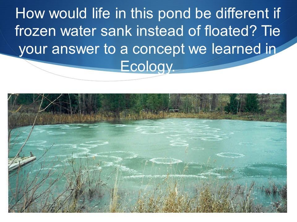 How would life in this pond be different if frozen water sank instead of floated.