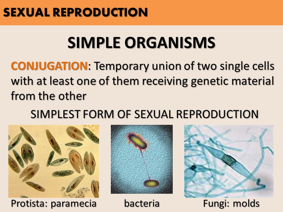 Asexual & Sexual REPRODUCTION - ppt video online download