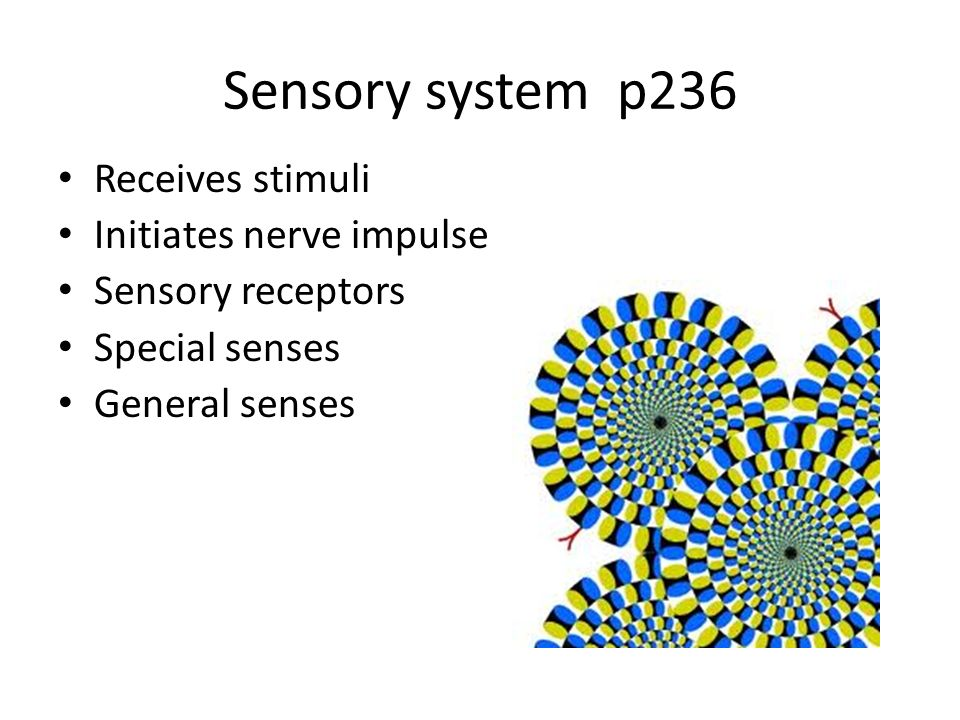 Chap 11 The Sensory System Ppt Video Online Download