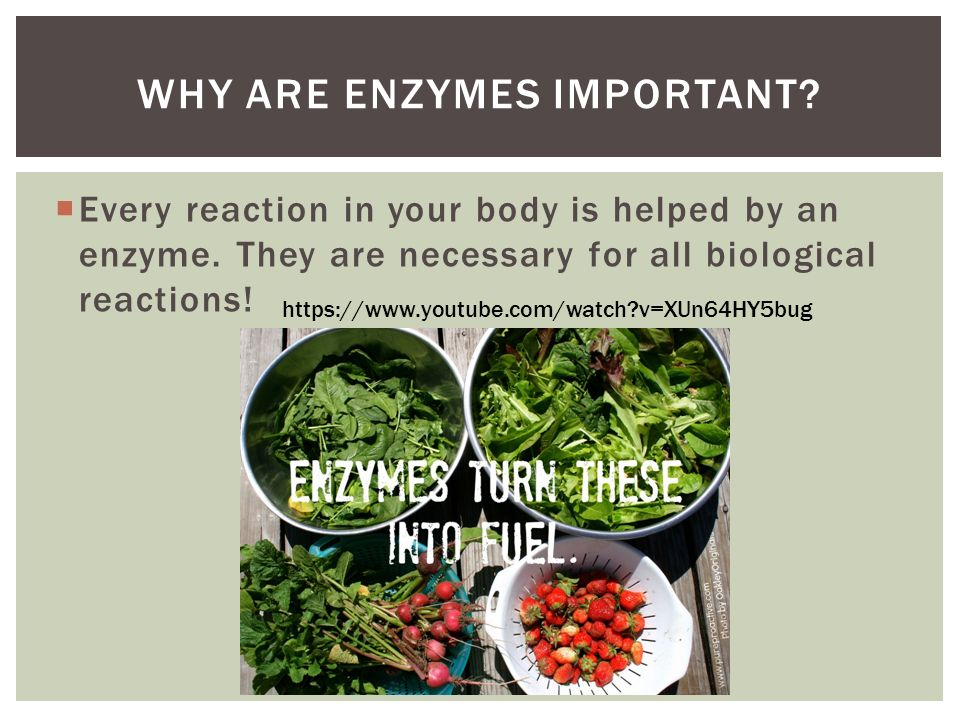understanding enzymes and its importance But the most important thing to understand is that homeostasis itself will to illustrate several of its important the important part of an enzyme is.