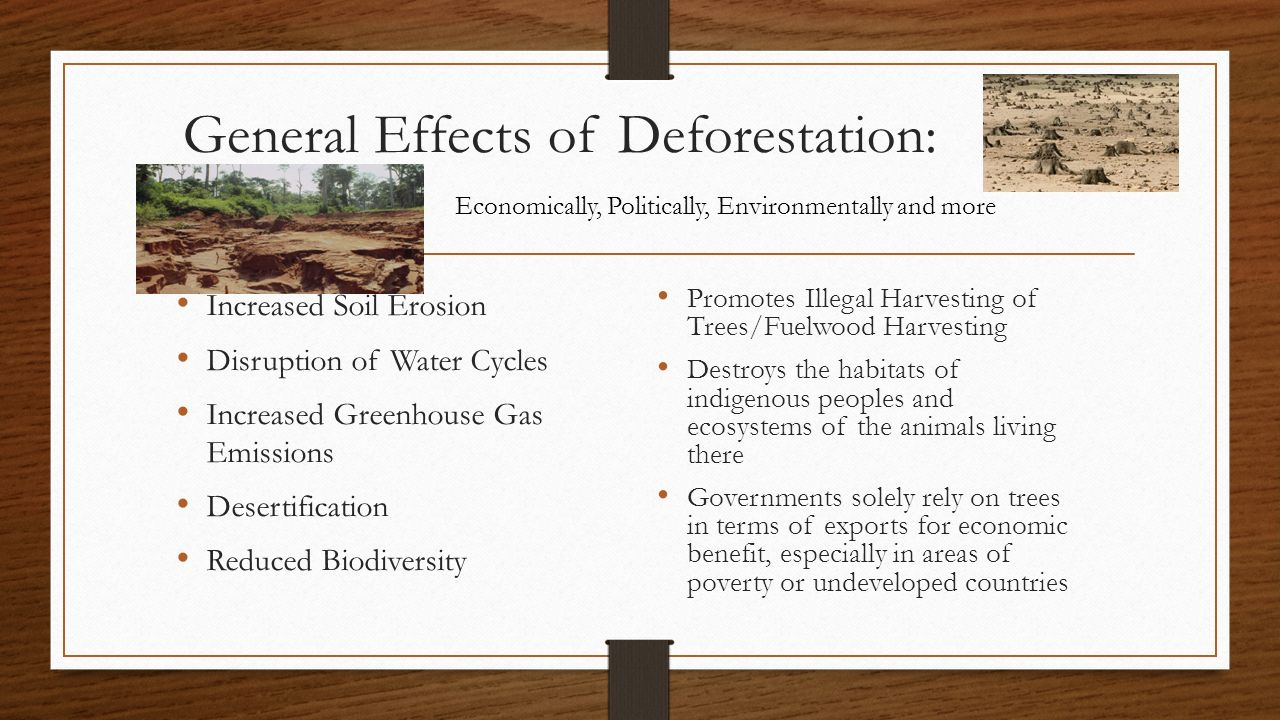 effects of deforestation Forests transport large quantities of water into the atmosphere via plant transpiration this replenishes the clouds and instigates rain that maintains the forests when deforestation occurs, precious rain is lost from the area, flowing away as river water and causing permanent drying this is a truly global.