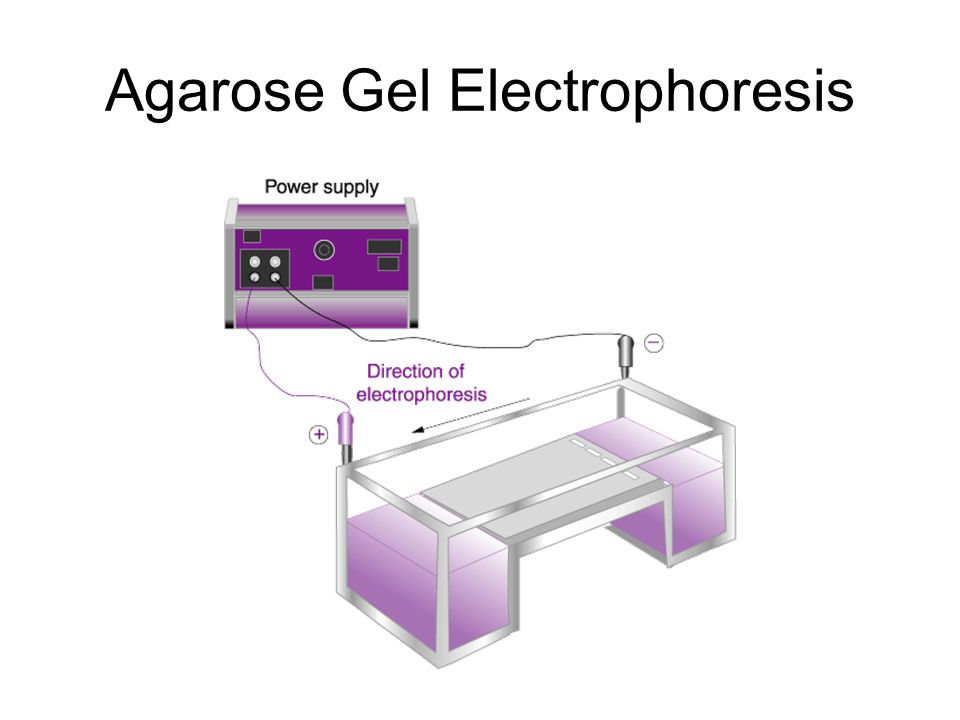 research papers on agarose gel electrophoresis Paper or cellulose strip electrophoresis gel electrophoresis () and agarose, two very commonly creasing application in biochemical research is cap-illary.