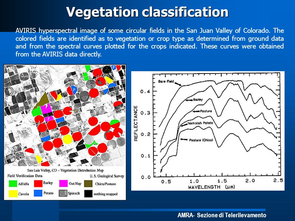 Vegetation classification
