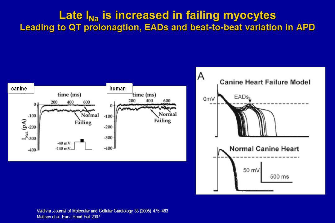 Late INa is increased in failing myocytes Leading to QT prolonagtion, EADs and beat-to-beat variation in APD
