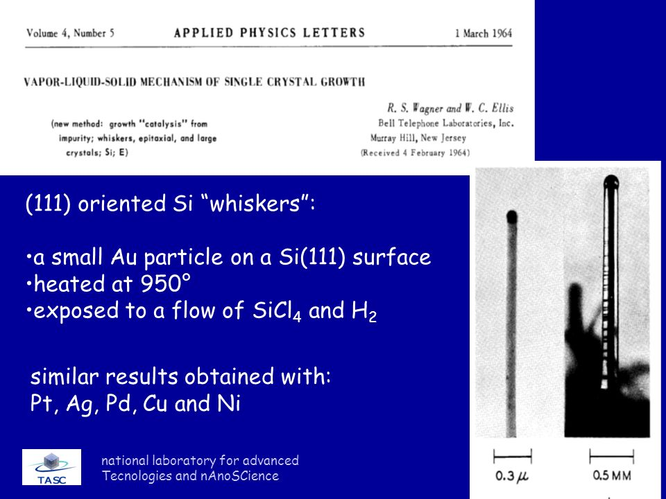 (111) oriented Si whiskers : a small Au particle on a Si(111) surface