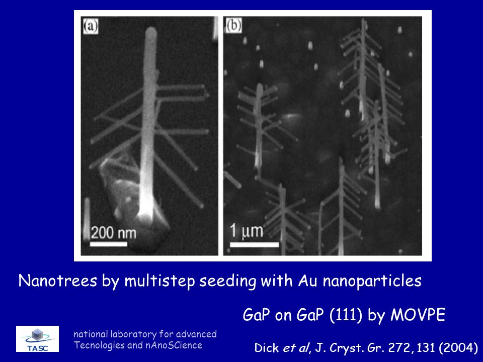 Nanotrees by multistep seeding with Au nanoparticles