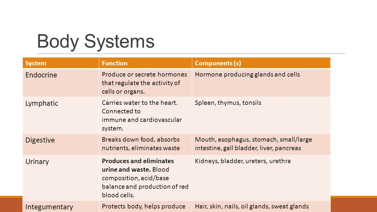 10883427 in addition 10011210 in addition Circulatory System Nov 2010 as well Digestive System And Endocrine furthermore Endocrine System Of A Goat. on endocrine glands slide