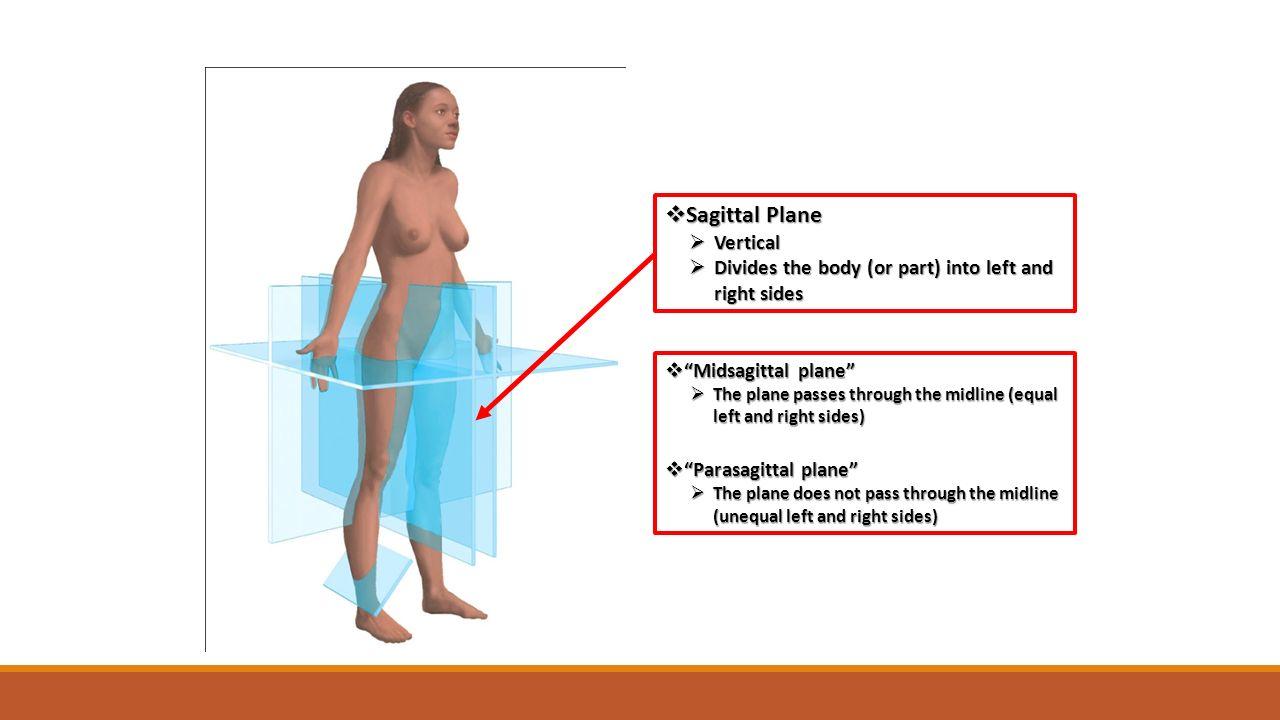 Ungewöhnlich Sagittalebene Definition Anatomie Zeitgenössisch ...