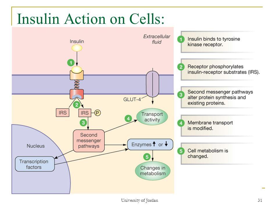 steroid hormone signalling model