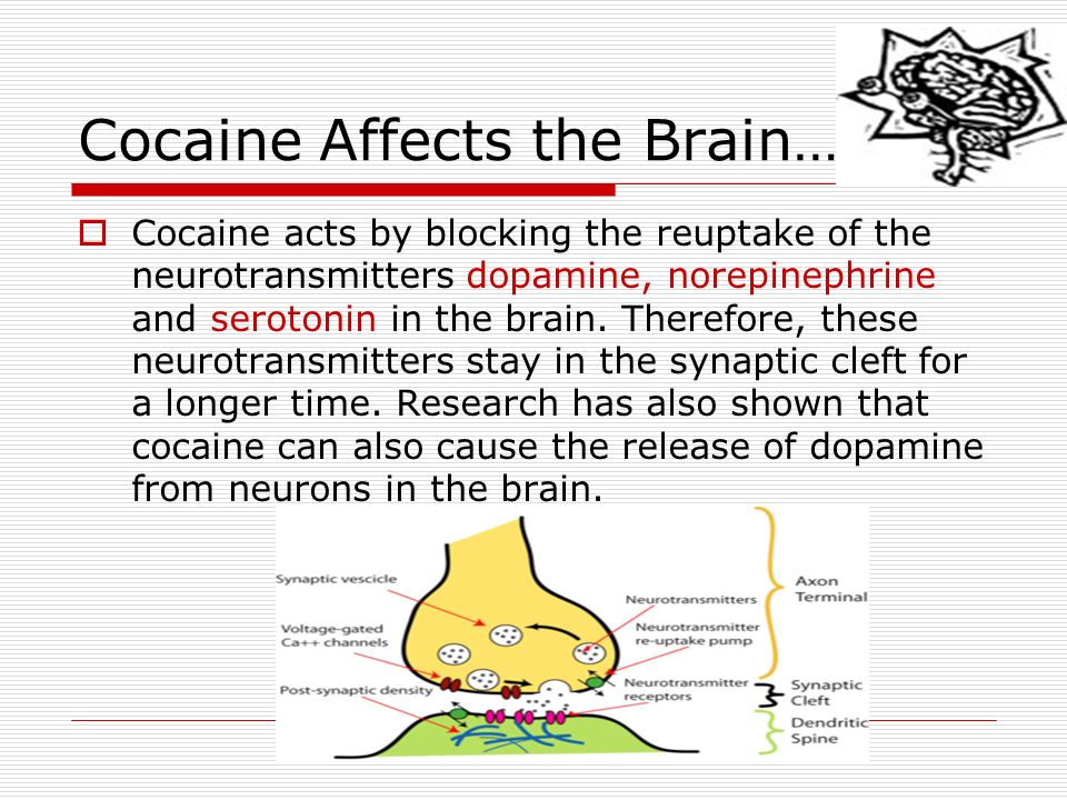 a study of dopamine and cocaine Molecular modeling and dynamics simulations have been performed to study  how cocaine inhibits dopamine transporter (dat) for the transport.