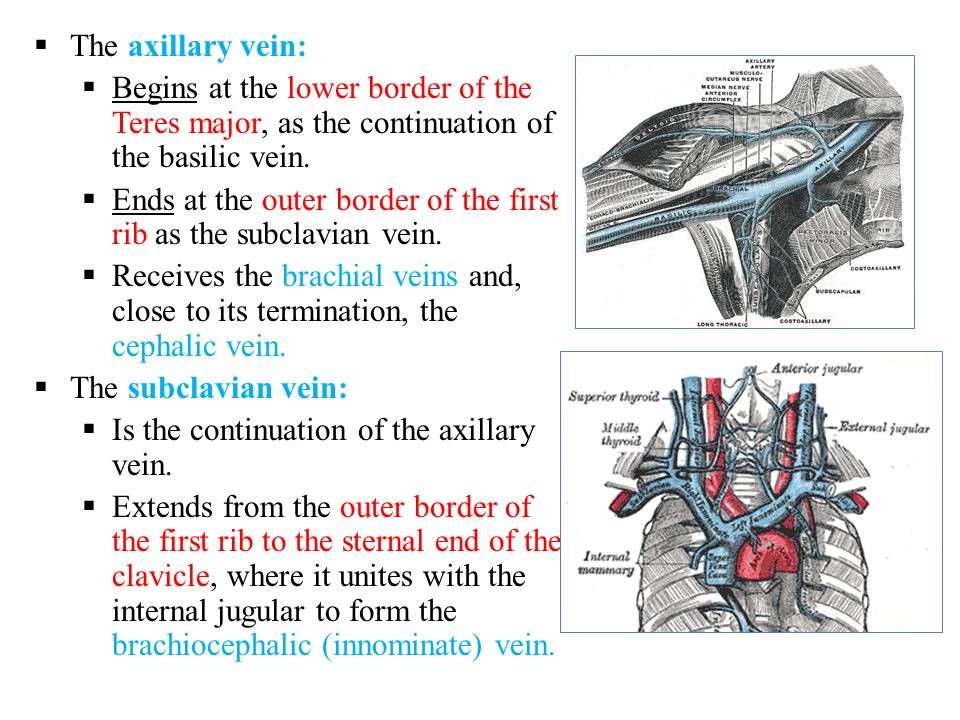 vascular anatomy of the upper limb - ppt download, Human Body