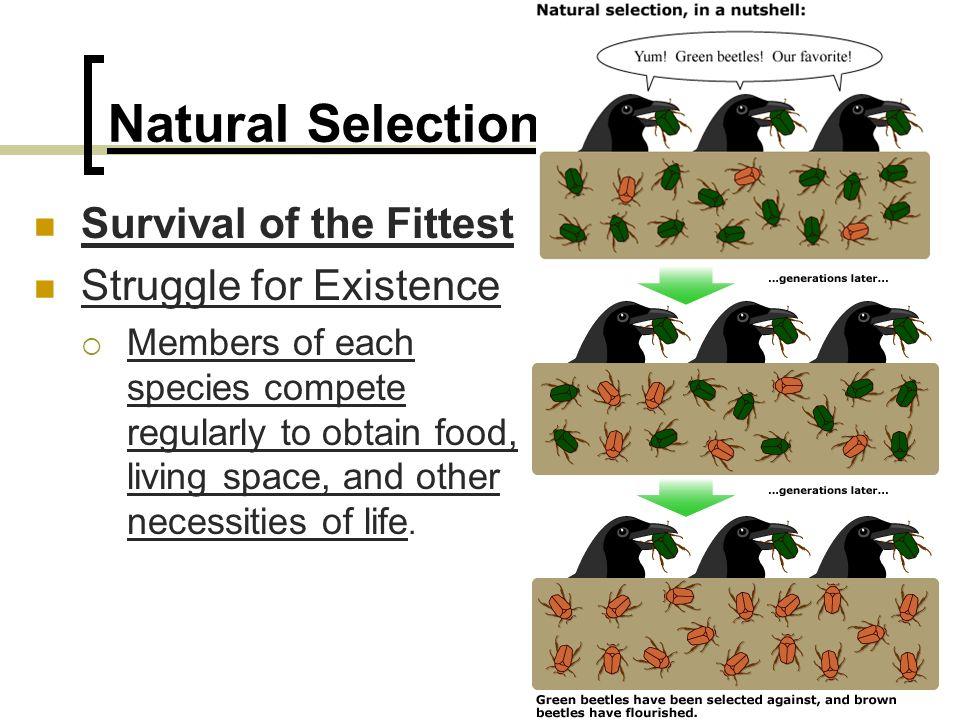 Selective breeding case study