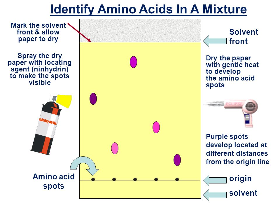 amino acids thesis High-performance liquid chromatographic separation of the enantiomers of  anita sztojkov-ivanov phd thesis szeged  unnatural β-amino acids 19 4.