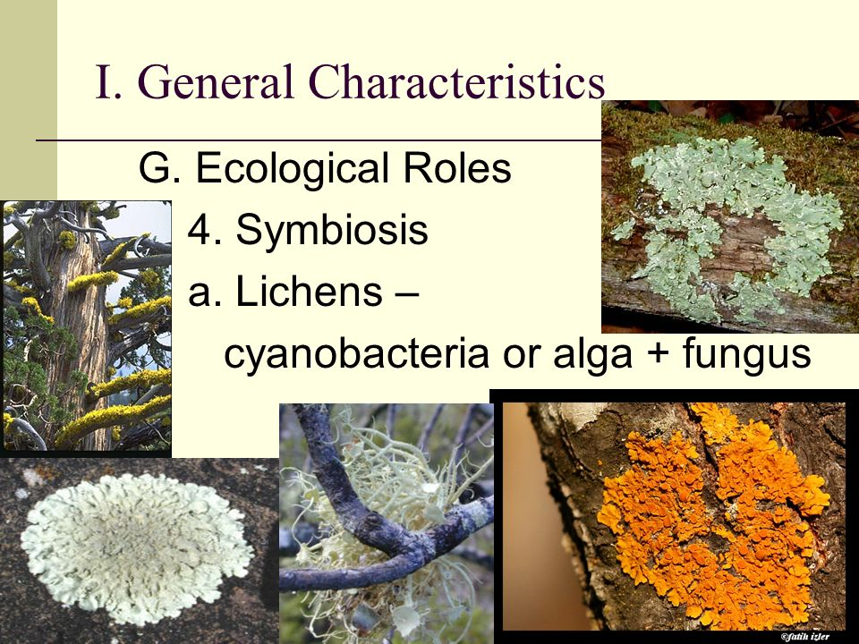 general characteristics of fungi pdf