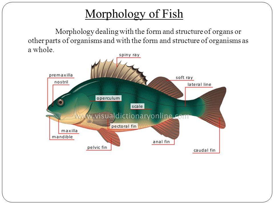 Contemporary Fish Anatomy Ppt Images - Anatomy Ideas - yunoki.info